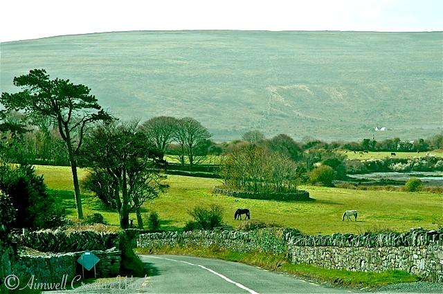 Irish Pastoral