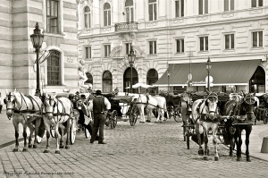 Cariage trade in Vienna